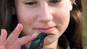 תמונה של ילדה מחזיקה ציפור