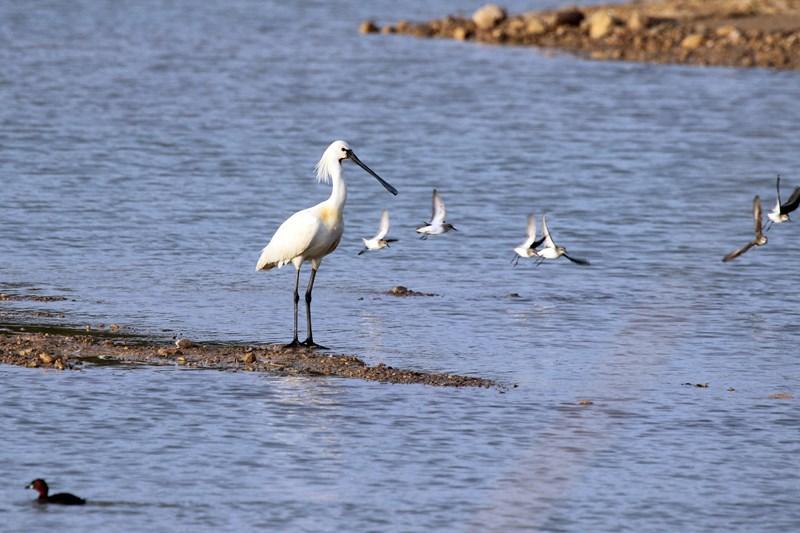 הציפורים חזרו לאגם אניטה